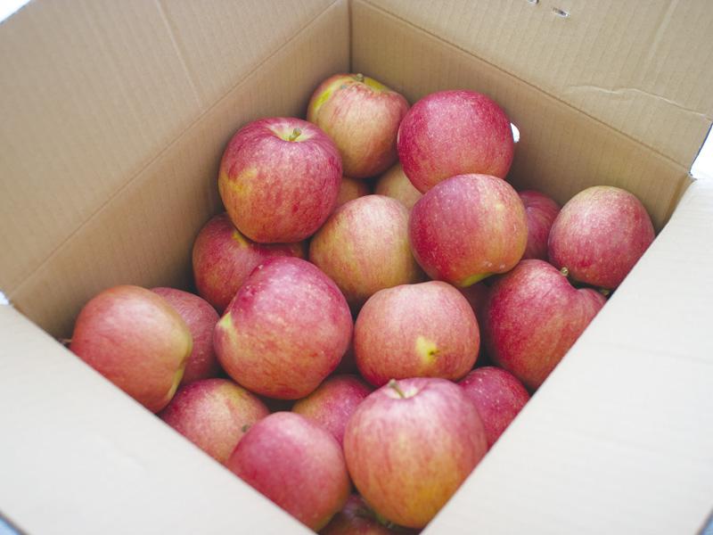 訳ありお得なふじりんご約10kgばら(家庭用)