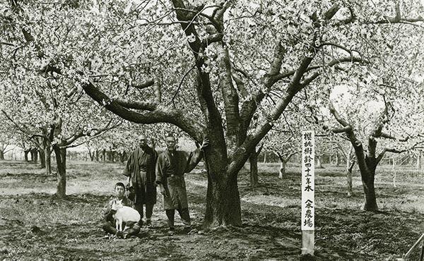 <span>さくらんぼ「佐藤錦」誕生秘話</span>さくらんぼの王様「佐藤錦」の生みの親である佐藤栄助翁は、当店の先祖にあたります。