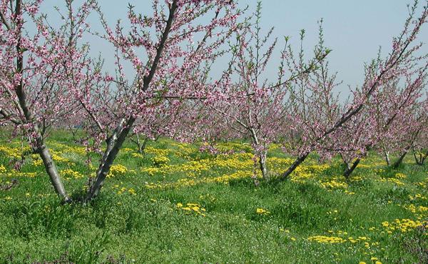 <span>自然が育む村山平野</span>色とりどりの花咲く村山平野に足を運び、芭蕉が歩いた道を辿ってみてはいかがでしょうか。