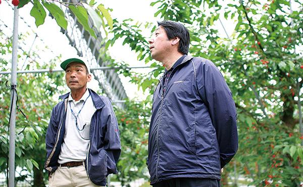 <span>さくらんぼ作りのカリスマを訪ねました</span>山辺地区でさくらんぼを作り続けて40年余、村山悟さんのさくらんぼ畑にお伺いしました。